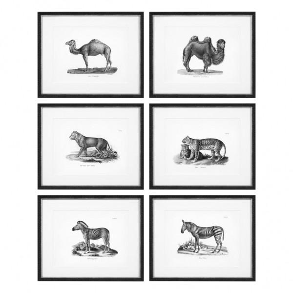 EICHHOLTZ Kunstdruck Historical animals Set von 6 Stk